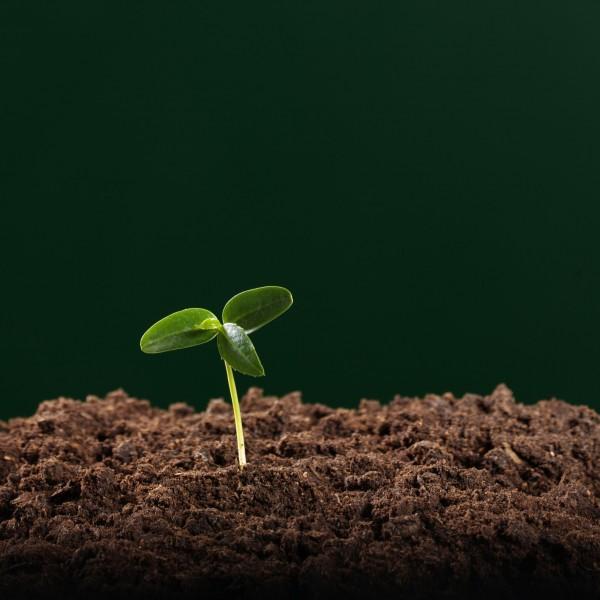 Seed Growing In Topsoil