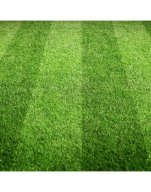 bowling green seed