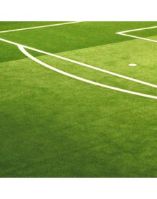 football grass seed